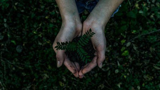 EP-23-Inteligencia Ecológica-NBS